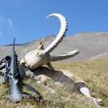 Hunting Gallery 05