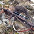 Hunting Gallery 123