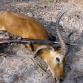 Hunting Gallery 125