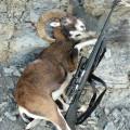 Hunting Gallery 148