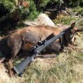 Hunting-Gallery-149