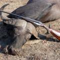 Hunting Gallery 15