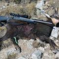 Hunting-Gallery-204
