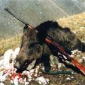 Hunting Gallery 22