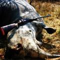 Hunting Gallery 31