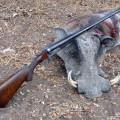 Hunting Gallery 33